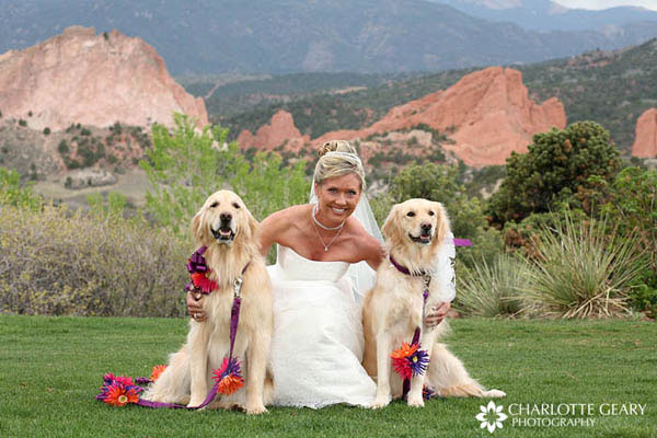 Dog ring bearers in orange and purple flowers